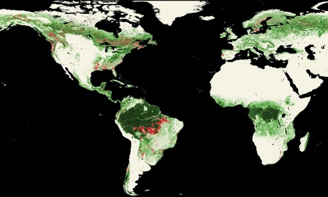 Landsat satellites show worldwide forest losses, marked in red, from 2000-2005.