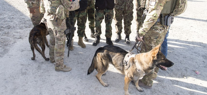 U.S. military working dogs in Kabul, Afghanistan, in 2017.