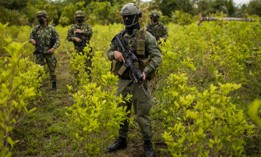 Police and soldiers stand on a coca field during a manual eradication operation in Tumaco, southwestern Colombia, Wednesday, Dec. 30, 2020.