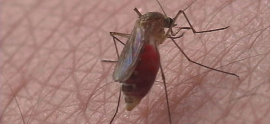 Mosquitoes can carry many diseases, including malaria.