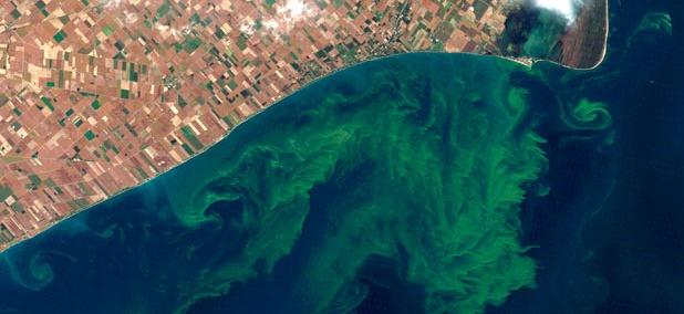 This NASA satellite photo shows algae blooms swirling on Lake Erie.