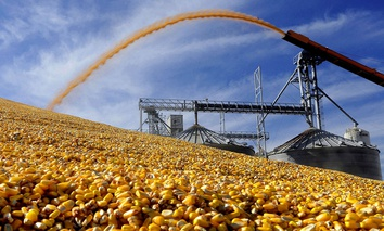 A central Illinois farmer deposits harvested corn outside a full grain elevator Virginia, Ill.
