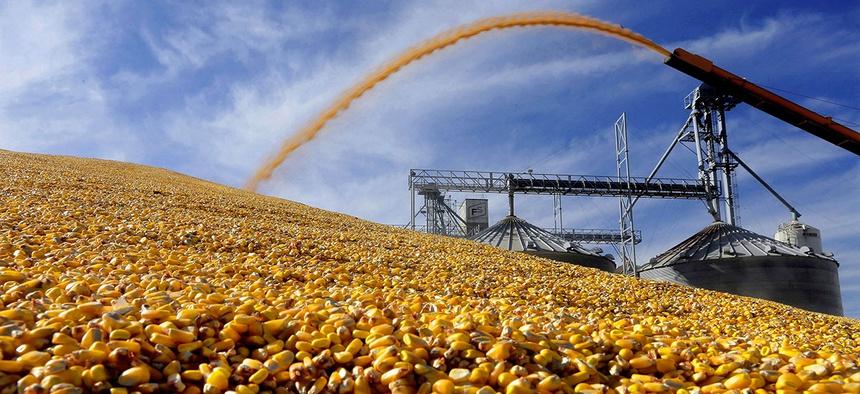 A central Illinois farmer deposits harvested corn outside a full grain elevator Virginia, Ill.