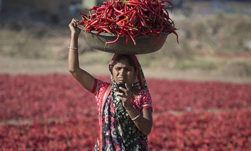 An Indian woman looks at her mobile phone as she carries red chillies on her head at a farm at Shertha village near Gandhinagar, India, Sunday, Feb. 25, 2018.