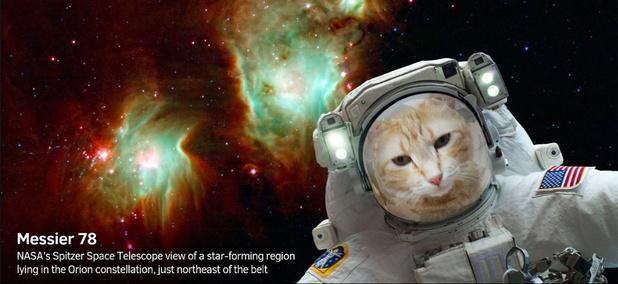 """This """"Catstronaut"""" selfie was taken with NASA's new app."""